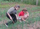Культивация и мульчирование как способы борьбы с сорняками