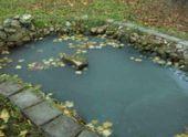 Кем заселить водоем в саду?