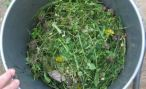Природные зеленые удобрения сидераты