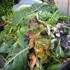 Как правильно сделать жидкий компост из травы