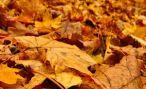 Как удобрять растения листьями