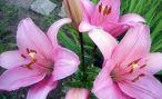 Классификация и виды садовых растений