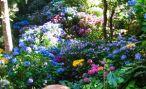 Названия цветов и растения для альпийской горки, рокария и каменистого сада