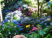Какие выбрать цветы и растения для альпийской горки, рокария, альпинария и каменистого сада