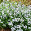 Холодостойкие растения и цветы для сада