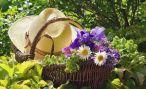 Летние работы в саду и огороде