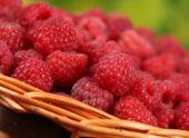 Малина это ягода для вашего сада