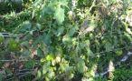 Фитофтороз овощных культур: фото фитофтороза картофеля и томатов