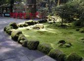 Декоративный мох в ландшафтном дизайне сада (с фото)