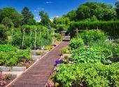 Посадка и совместимость овощей на огороде