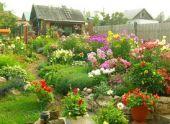 Виды и названия цветников