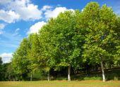 Лесные породы деревьев и кустарников средней полосы России
