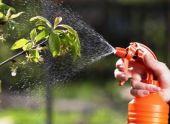 Обработка сада и огорода от болезней и вредителей в июне