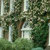 Вьющиеся растения для вертикального озеленения