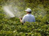 Защита винограда от болезней и вредителей: средства борьбы