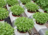 Выращивание разных овощных культур на огороде