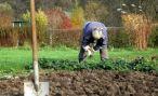 Правила обработки почвы в саду и на огороде