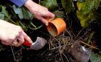 Чем и как правильно удобрять сад