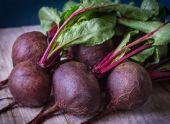 Болезни красной свеклы – выращивание без проблем