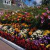 Названия и фото светолюбивых клумбовых цветов