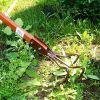 Меры борьбы с сорняками на даче: участке и огороде