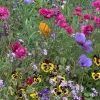Дикие цветы в саду: фото и списки названий дикорастущих растений
