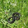 Борьба со змеями на садовом участке