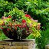 Сад из цветов в контейнерах