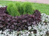 Декоративно-лиственные садовые растения