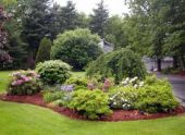 Декоративные кустарники и деревья для сада