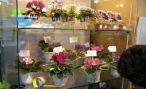 Коллекционирование комнатных растений