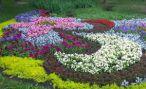 Основные виды цветников