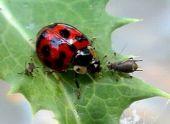 Вредные и полезные насекомые