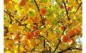 Секреты осенней подкормки плодовых деревьев и кустарников для получения богатого урожая в следующем году