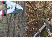 Секреты ухода за садом осенью для подготовки к зиме