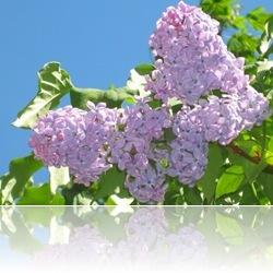 Архив. Весна-лето 2011: модные тенденции - Страница 4 17615m537id_thumb