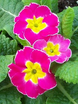 Фото цветка с красным центром 73