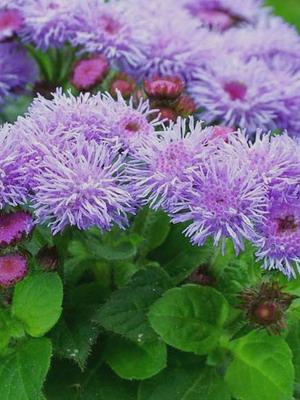 Список растений цветов