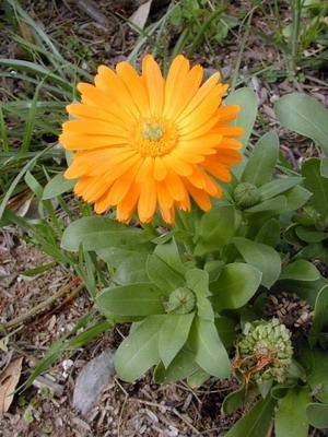 Клумбные цветы фото и названия