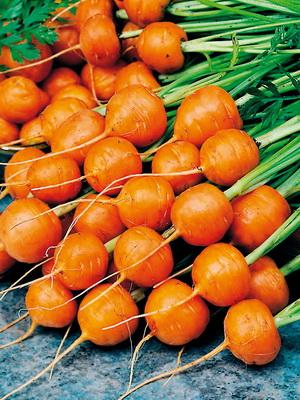 сорта морковь фото