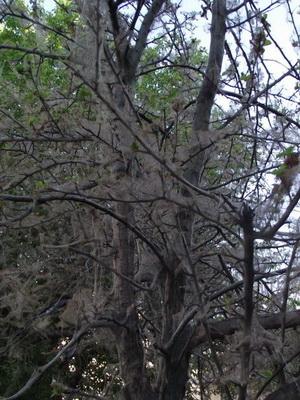 Земли различных грибах стеблях цветов ветках кустарников стволах деревьев