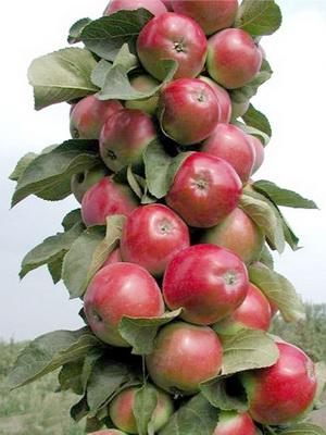 Виды яблок
