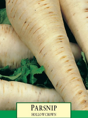Пастернак выращивание из семян 96