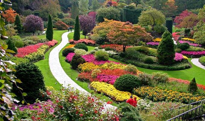 виды и названия цветников и клумб с фото модульный цветник