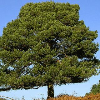 деревья санкт-петербурга фото с названиями