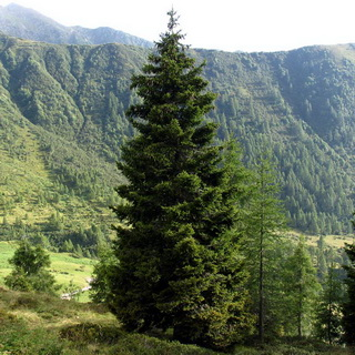 Что растет в чаще леса