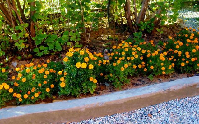 Дивный сад