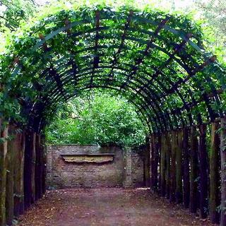перголы и арки в ландшафтном дизайне