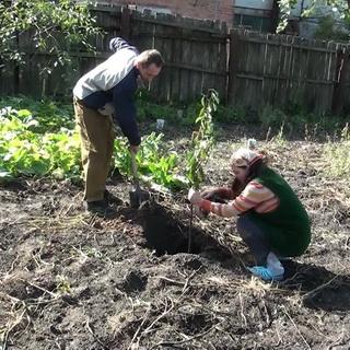 Выращивание и обрезка черешни 322